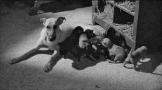 Eraserhead  dogs nursing